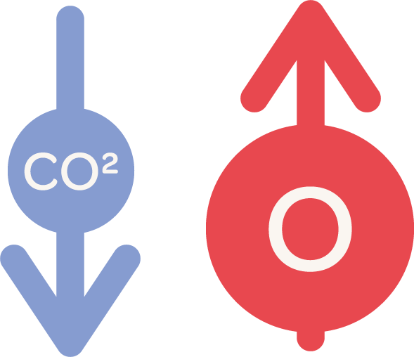 illustration of carbon dioxide levels decreasing, and oxygen levels increasing
